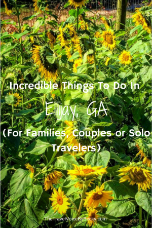 Things To Do In Ellijay, GA